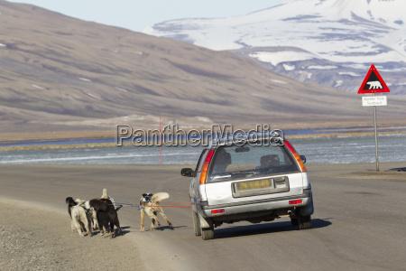 europe norway spitsbergen svalbard longyearbyen husky