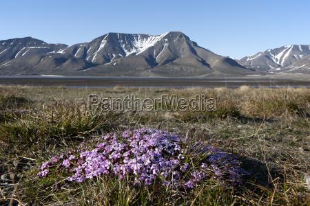 europe norway spitsbergen svalbard longyearbyen moss