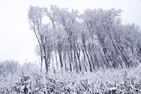 austria vienna wienerwald view of snow