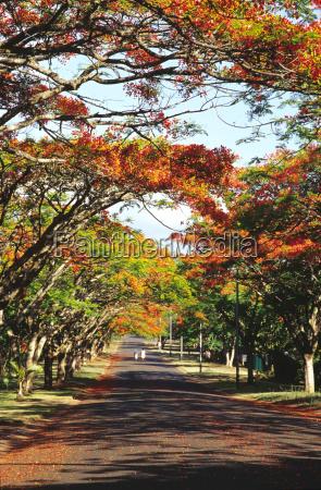 people walking on road amid trees