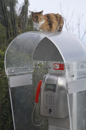 italy stromboli cat sitting on telephone