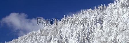 baum winter wolke europa deutschland brd