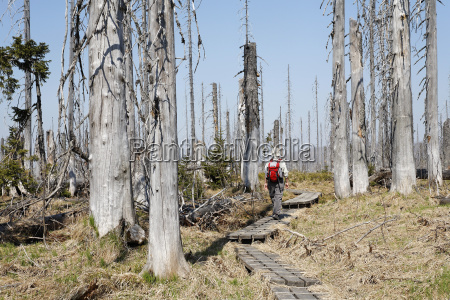 germany bavaria lower bavaria forest with