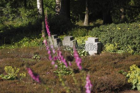 mahnmal gedenkstaette stein blume pflanze gewaechs