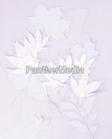 variety of leaves aganist pink background