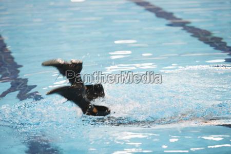 businessman jumping in pool niedriger abschnitt
