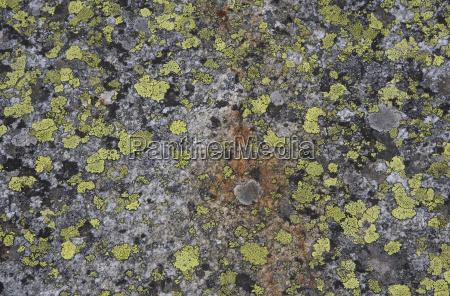 oesterreich wildgerlostal lichen auf felsen hoehenaussicht