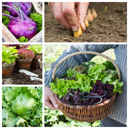 collage with gardening and vegetables