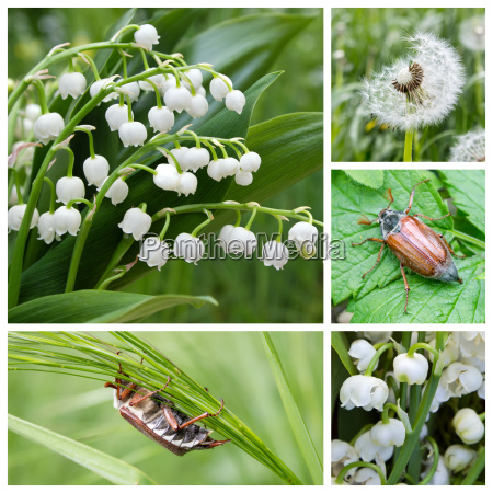 collage with lily of the valley