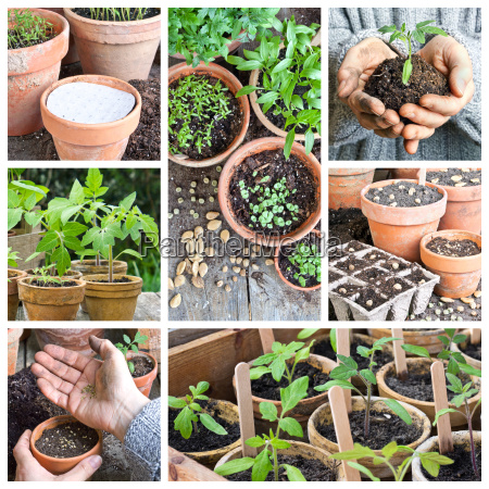 collage with sowing and growing vegetables