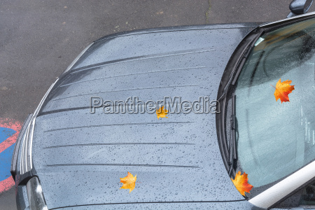 water drops on a car bonnet