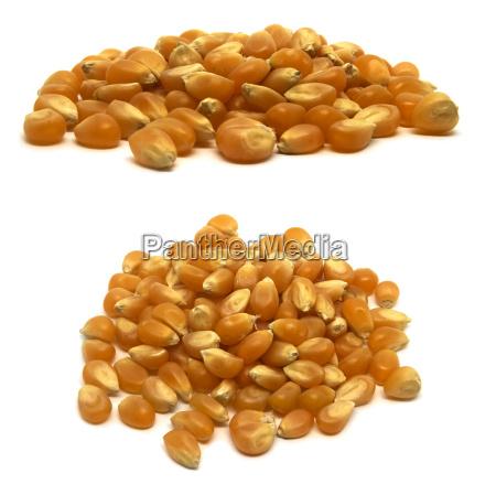 raw uncooked yellow popcorn kernels on