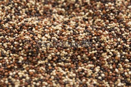 close up of quinoa