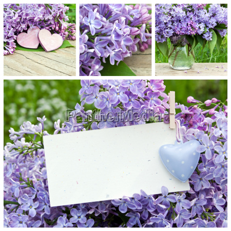 collage with violet lilac and heart