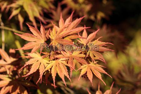 blatt baumblatt baum blaetter hintergrund rot