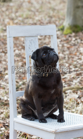 a black dog sits on a