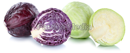 white cabbage and blue cabbage white