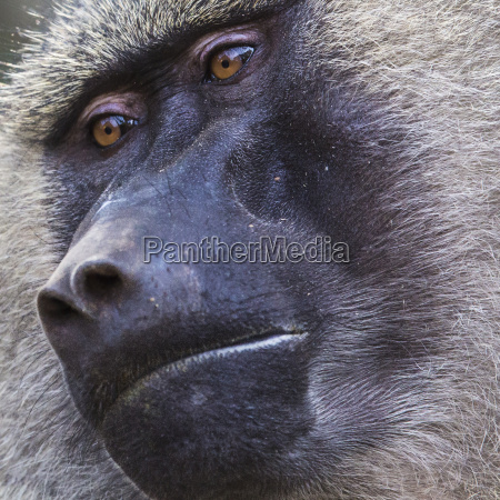pavillon-tarangire, nationalpark-wildlife, reserve, in, tansania, afrika - 21324652