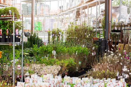 ornamental plants for sale in gardening