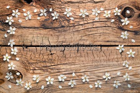 fruehlingsblumen auf holz hintergrund