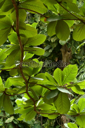 plants in the canopy of the