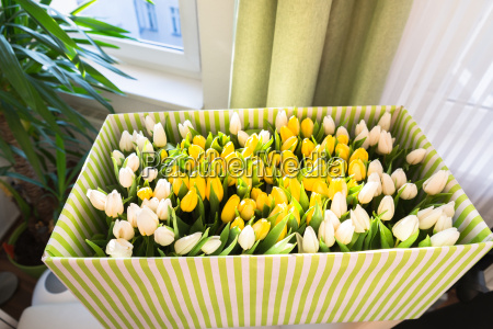 tulips in the open box