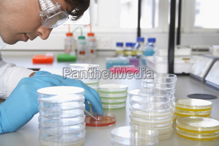 scientist analyzing petri dish