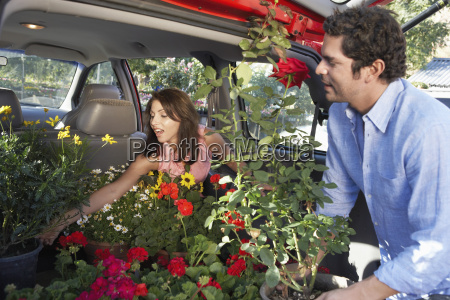 couple keeping flower plants in cars