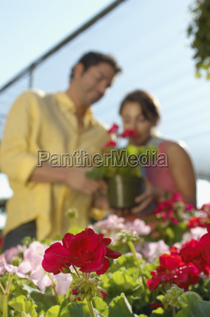 focus on flower plants with couple