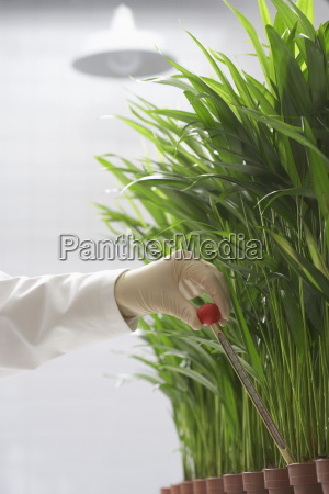 scientist conducting test on plants