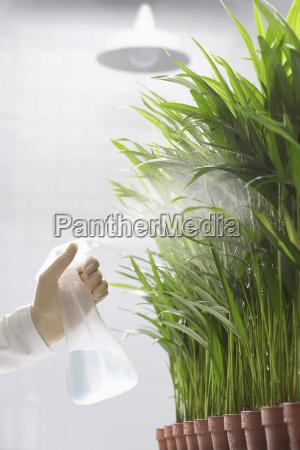 scientist spraying plants