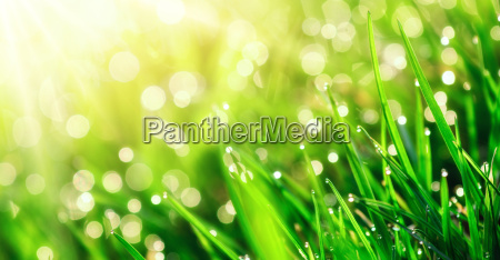 grass macro with water drops