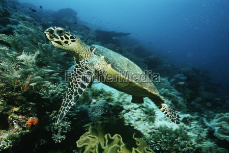 indonesien unterwasser outdoor freiluft freiluftaktivitaet im
