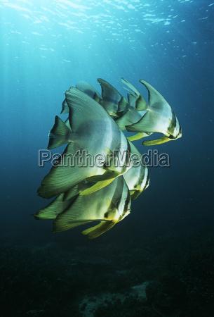 indonesien fisch unterwasser outdoor freiluft freiluftaktivitaet