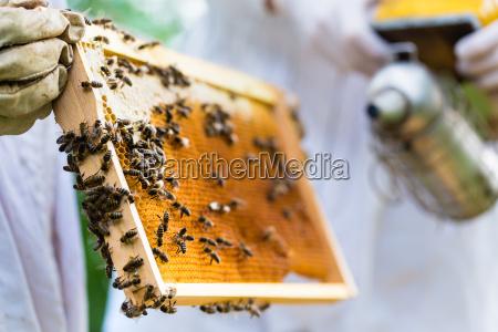 imker mit raucher kontrolle bienen und
