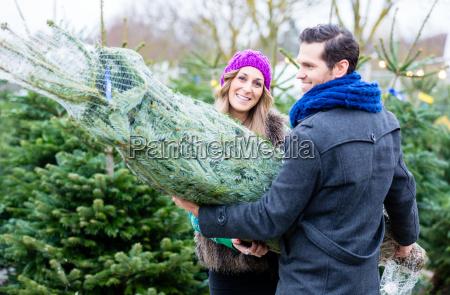 paar tragend gekauft weihnachtsbaum