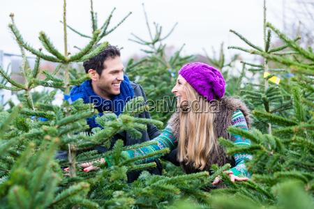paar sucht weihnachtsbaeume zu kaufen