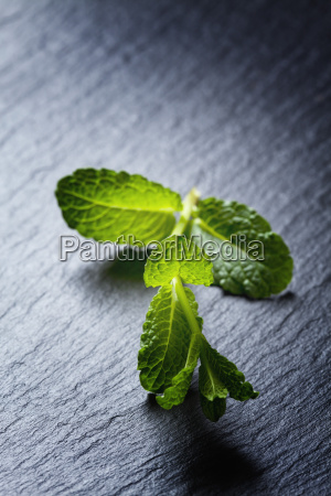 twig of peppermint on slate