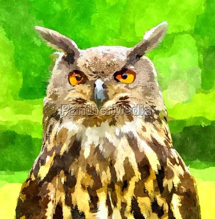 farbe closeup nahaufnahme tier vogel gruen