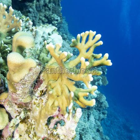 unterwasser kunstspringen tauchend unterwasser natur