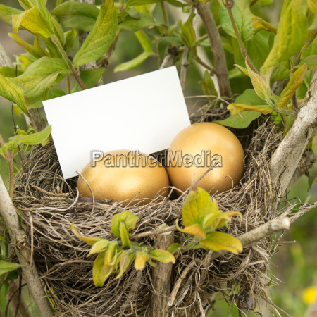 birds nest with two golden eggs