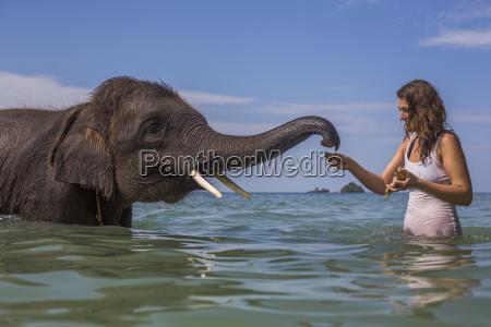 mid adult woman feeding elephant in