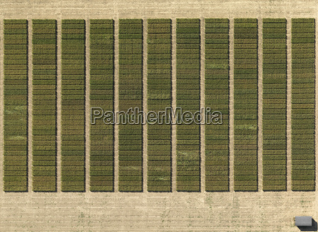 aerial view of crops in agricultural