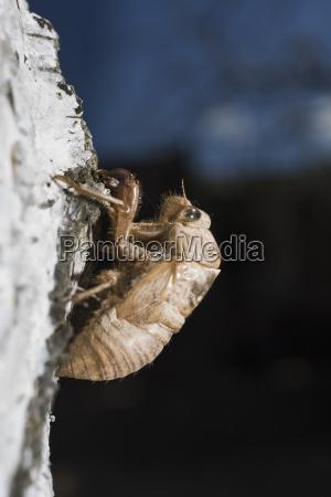 close up of cicada on rock
