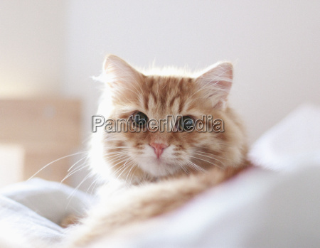close up of cat relaxing at