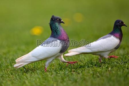 vogel wildlife taube tauben suesswasser see