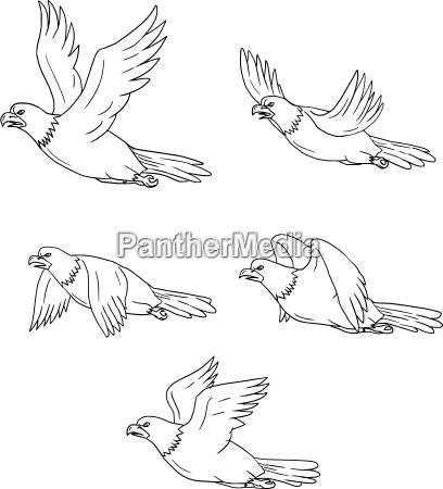 eagle flying side cartoon collection set