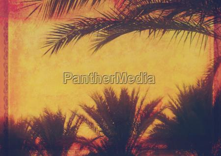 grunge tropischer hintergrund mit kokos palmen