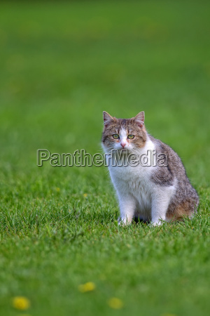 cat in a clearing