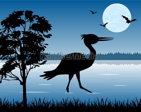 baum vogel holz fauna nacht nachtzeit